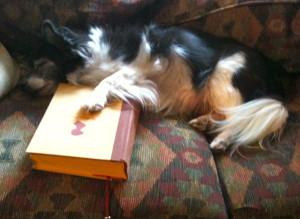 Dog Reads Austen