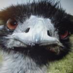 Wird Bird